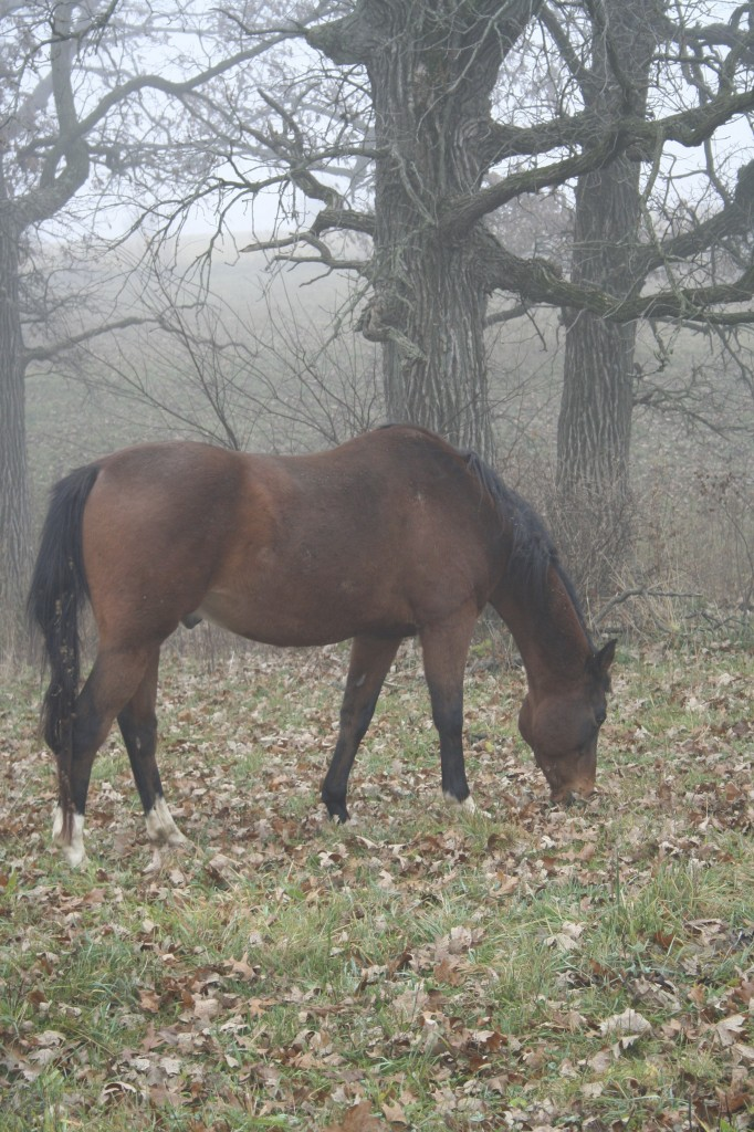 My sweet Anglo-Arab gelding, born the year we lived in Salt Lake City, named after my brother, my dad and my grandfather.
